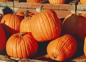 Pumpkins[1]